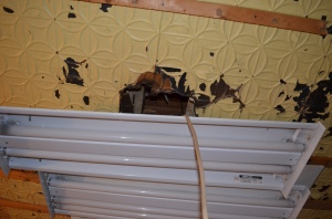 Drop Ceiling Coming Down, Old florescent lighting the tin starting to show